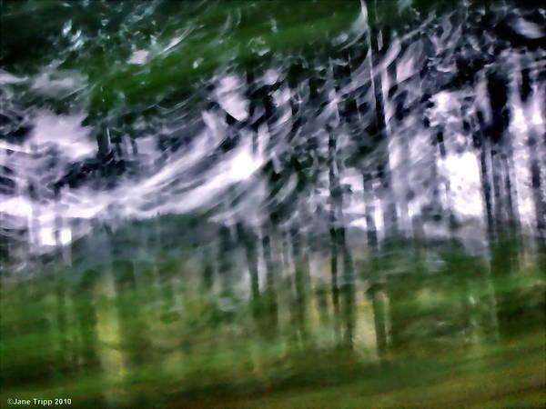 Wall Art - Photograph - Forest Dance  by Jane Tripp
