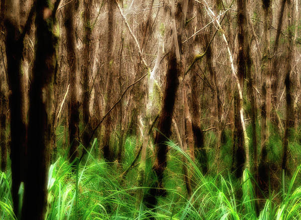 Photograph - Forest Dream by Nicholas Blackwell