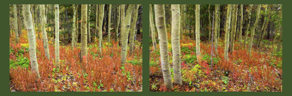 Photograph - Forest Enchantment Rembrandt Style Diptych Art by James BO Insogna