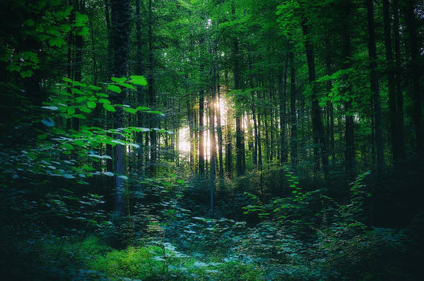 Photograph - Light Shining Through The Trees  by Fabrizio Troiani