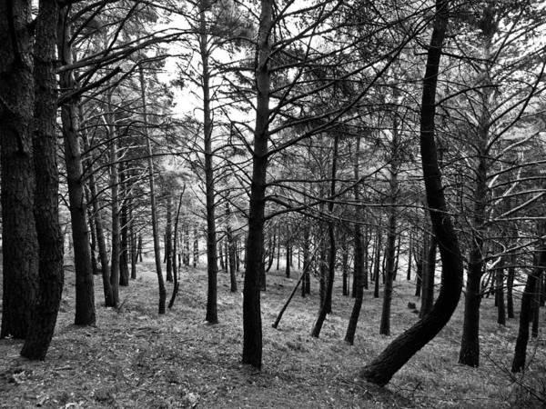 Vegetal Photograph - Forest by Felix M Cobos