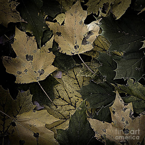 Photograph - Forest Floor - Leaf 13 by Pete Hellmann