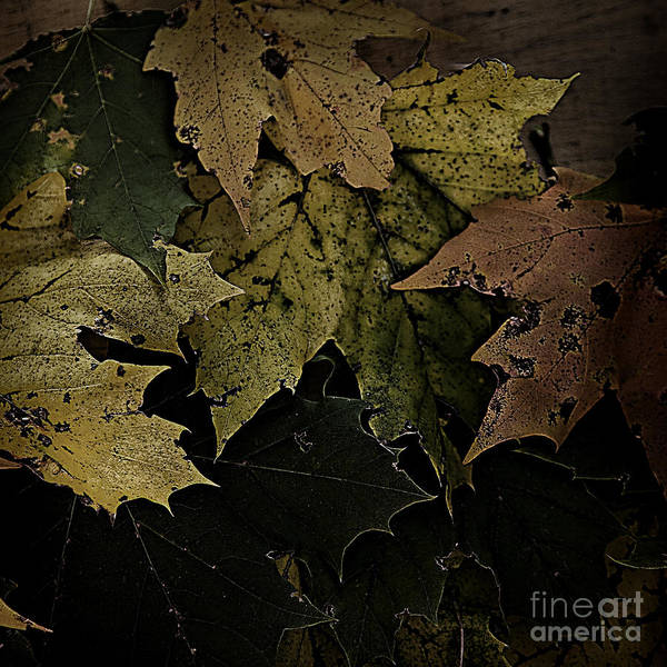 Photograph - Forest Floor - Leaf 16 by Pete Hellmann