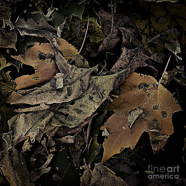 Photograph - Forest Floor - Leaf 17 by Pete Hellmann