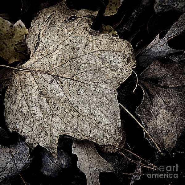Photograph - Forest Floor - Leaf 8 by Pete Hellmann