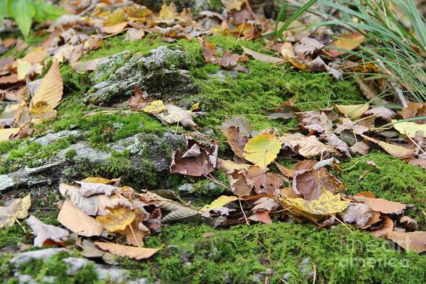 Photograph - Forest Floor by Allen Nice-Webb