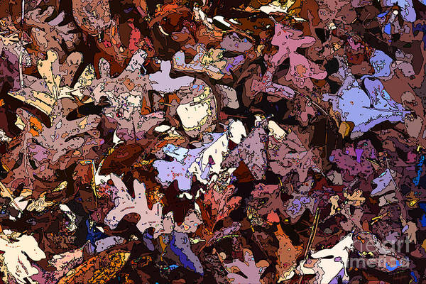 Wall Art - Photograph - Forest Floor By Daylight by Anthony Forster