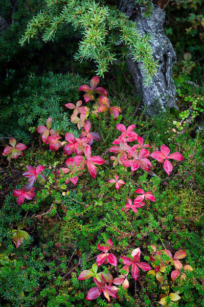 Photograph - Forest Floor In Autumn by Tim Newton