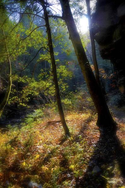 Photograph - Forest Floor by Sam Davis Johnson