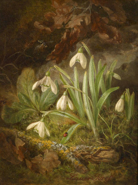 Snowdrop Painting - Forest Floor With Snowdrops by Josef Lauer