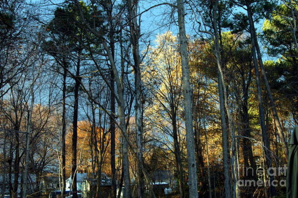 Photograph - Forest For The Trees by Clayton Bruster