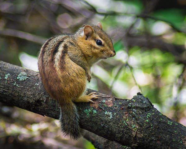 Munk Wall Art - Photograph - Forest Friend by Bill Pevlor