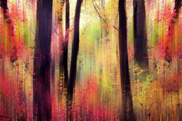 Impressionistic Photograph - Forest Frolic by Jessica Jenney