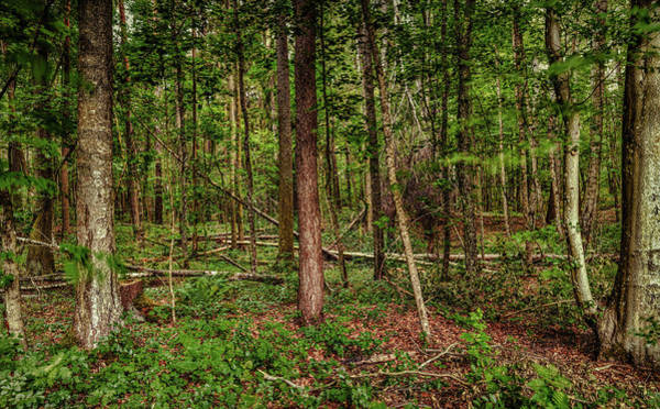 Photograph - Forest #g5 by Leif Sohlman