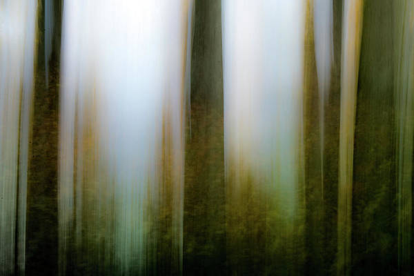 Photograph - Forest Impression by Michael Arend