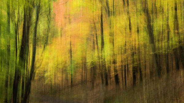Photograph - Forest Impressions by David Waldrop