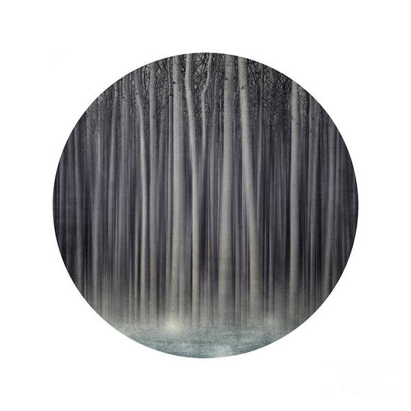 Wall Art - Photograph - Forest In A Circle by Priska Wettstein