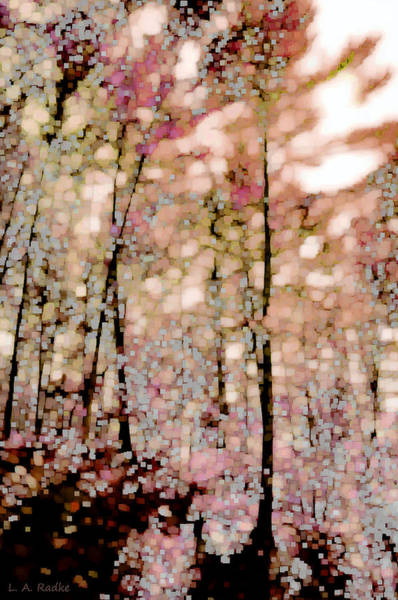 Photograph - Forest In Autumn by Lauren Radke