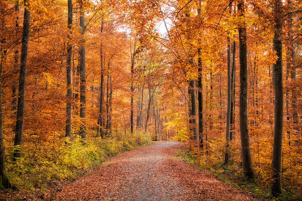 Photograph - Forest In Autumn Nature Park Schoenbuch Germany by Matthias Hauser