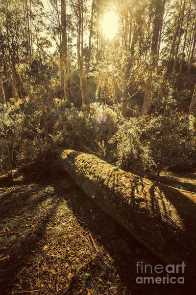 Fallen Tree Photograph - Forest In Fall by Jorgo Photography - Wall Art Gallery