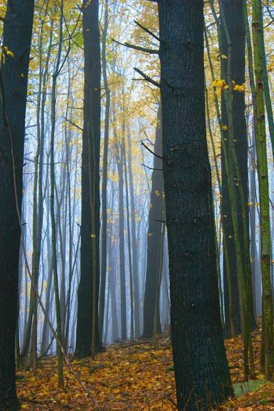 Photograph - Forest In Fog by Polly Castor