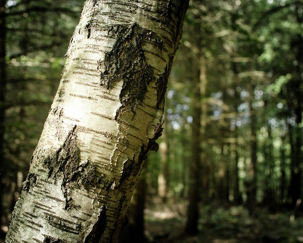 Photograph - Forest In Germany by Miguel Winterpacht
