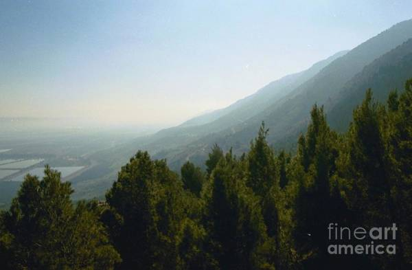 Forest In Israel Art Print