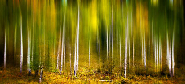 Photograph - Forest In Motion by Joye Ardyn Durham
