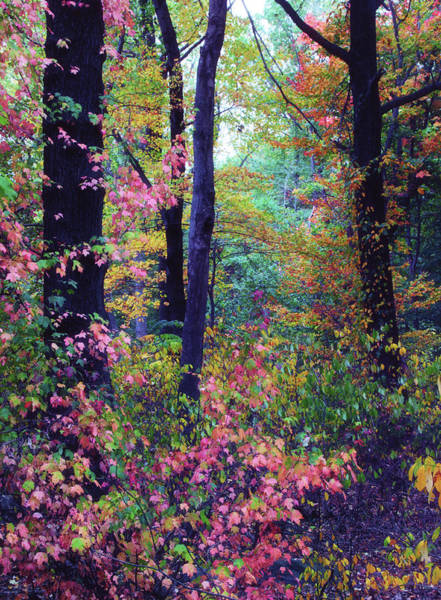 Photograph - October Forest by Jessica Jenney