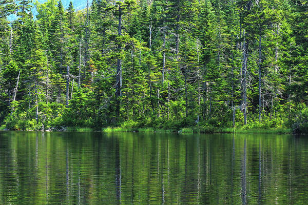 Photograph - Forest Lake by Brian Pflanz