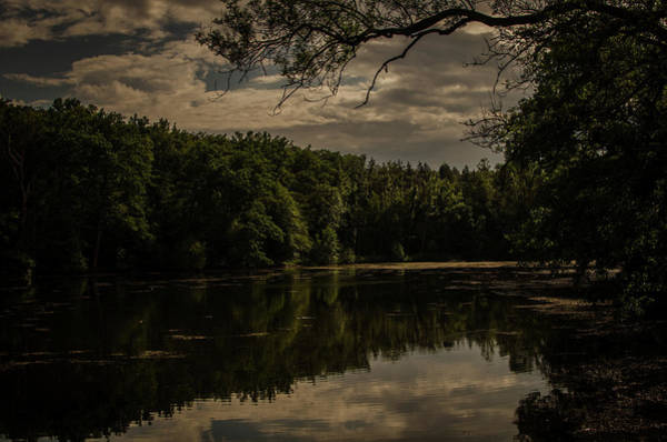 Photograph - Forest Lake In Germany by Miguel Winterpacht