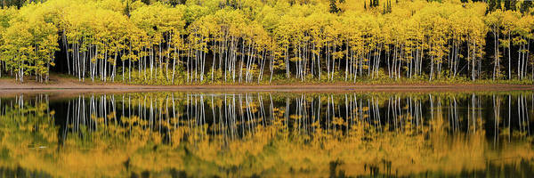 Photograph - Forest Lake Reflection by Dustin LeFevre