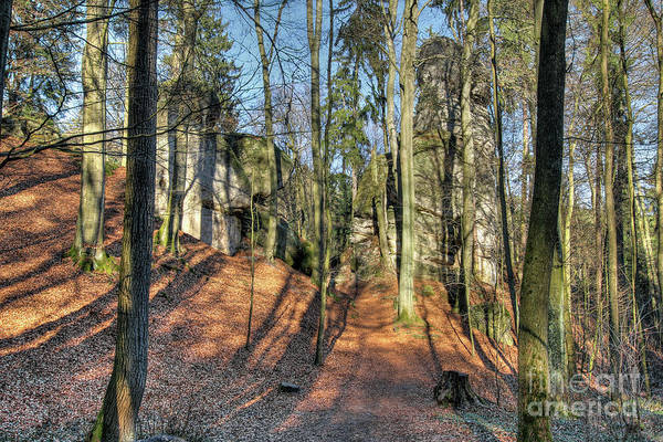 Woodland Wall Art - Photograph - Forest Landscape In Bohemian Paradise by Michal Boubin