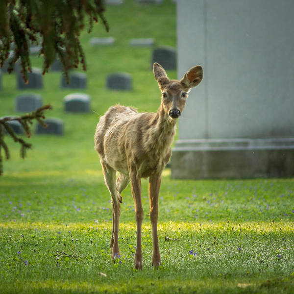 Photograph - Forest Lawn Spring Yearling by Chris Bordeleau
