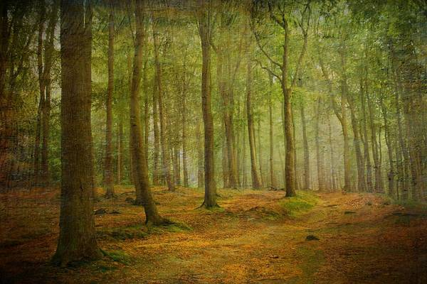 Wallpaper Mixed Media - Forest Light 7 by Heike Hultsch