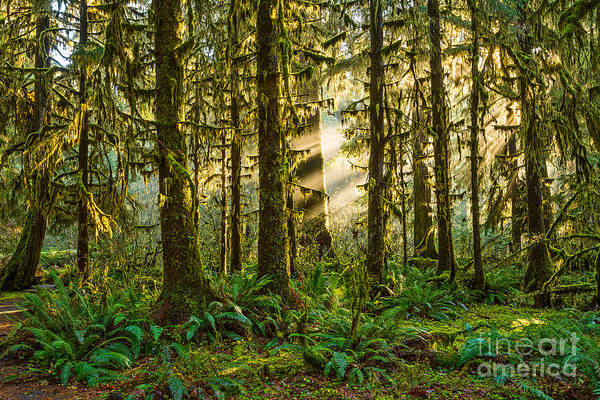 Wall Art - Photograph - Forest Light by Jamie Pham