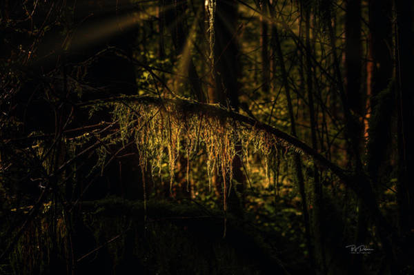 Photograph - Forest Moss by Bill Posner