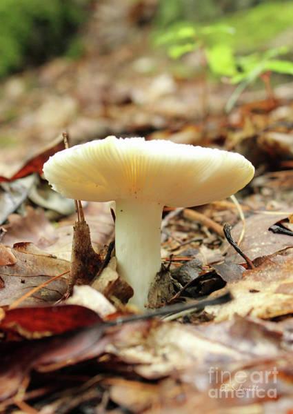 Photograph - Forest Mushroom by E B Schmidt