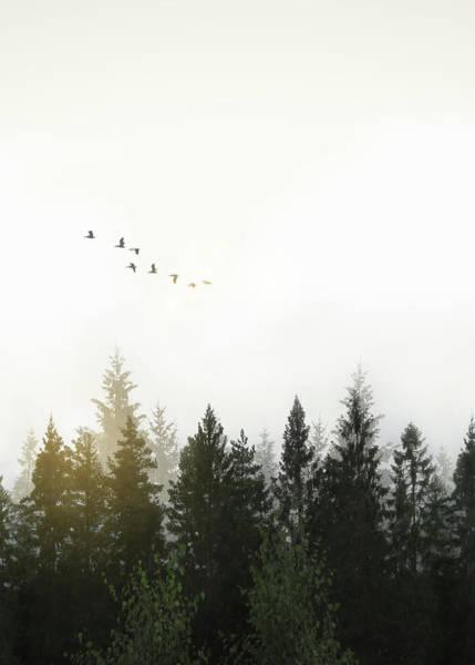 Tree Digital Art - Forest by Nicklas Gustafsson