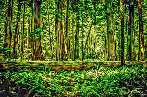 Photograph - Forest Of Cathedral Grove by Roxy Hurtubise