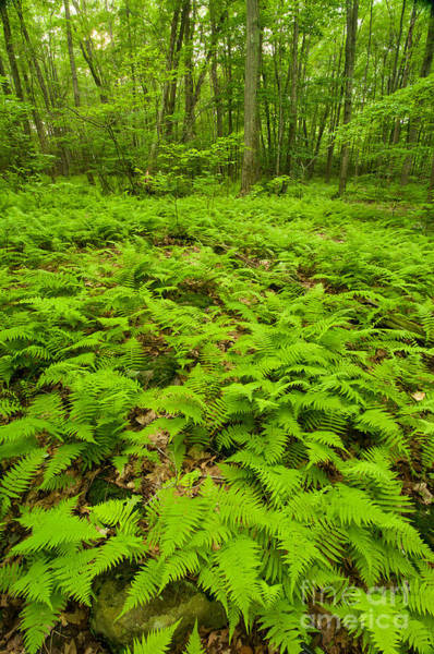 Southern Uplands Wall Art - Photograph - Forest Of The Ferns by JG Coleman