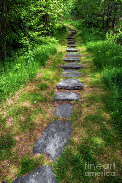 Photograph - Forest Path by Adrian Evans