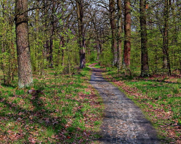 Photograph - Forest Path by Anthony Dezenzio