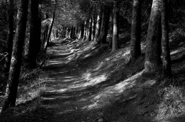 Photograph - Forest Path by Peter OReilly