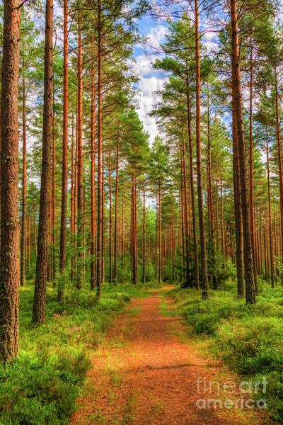 Salo Wall Art - Photograph - Forest Path by Veikko Suikkanen