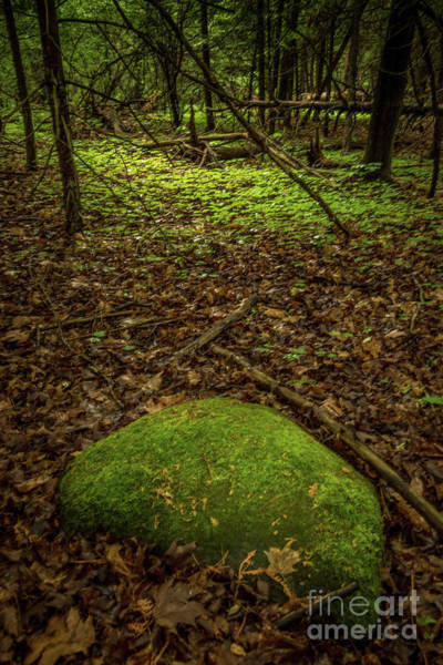 Photograph - Forest Pathways 6 by Roger Monahan