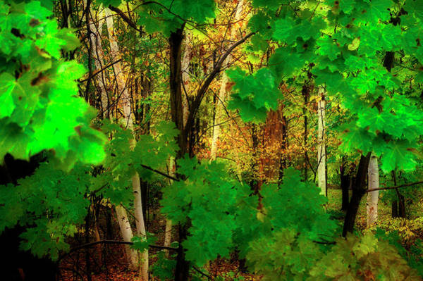Photograph - Forest Primevil by Frank Vargo