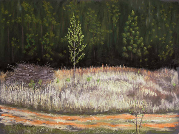 Pastel - Forest Rebirth - Pastel by TD Wilson