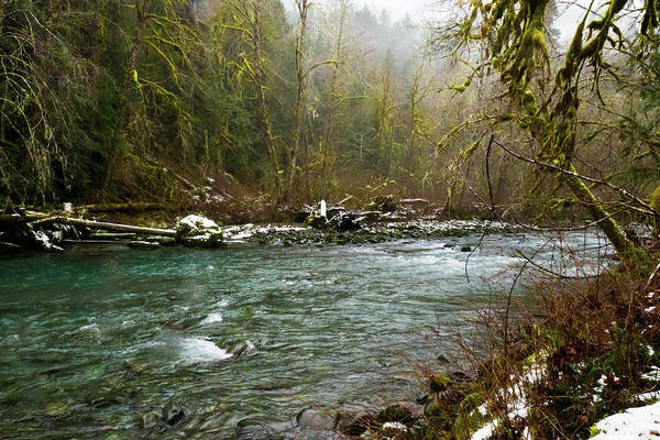 Photograph - Forest River by Crystal Hoeveler