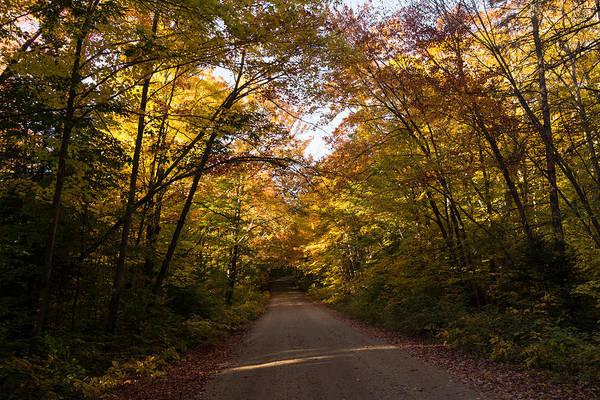Photograph - Forest Road - A Joy Ride Into Autumn by Georgia Mizuleva